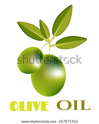 Olive, green twig with many olives, text - stock vector