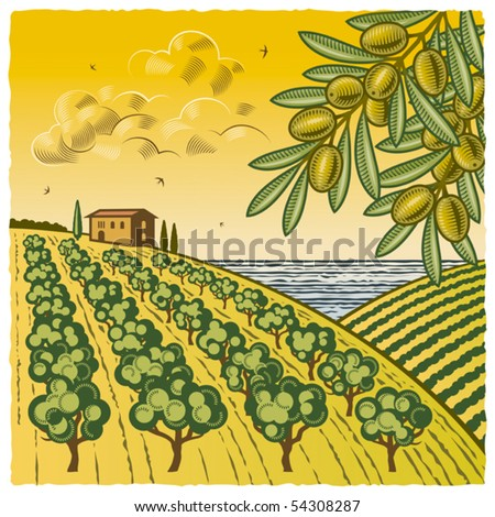 Olive Grove. Vector - stock vector