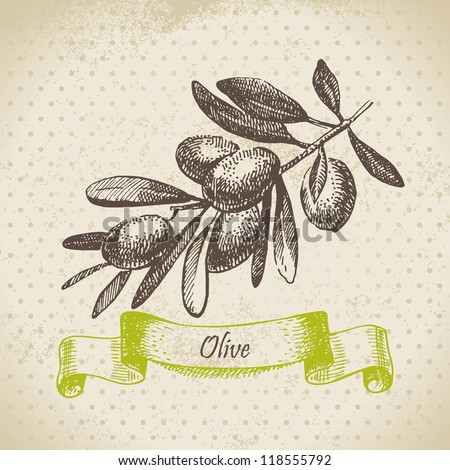 Olive. Hand drawn illustration - stock vector
