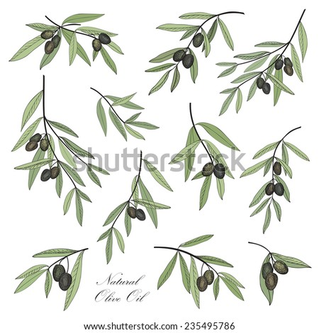 Olive. Hand drawn olive branch set. Stylish design elements collection for label, pack. - stock vector