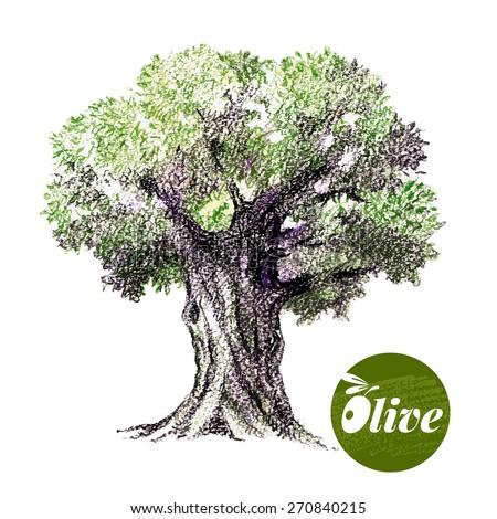Olive Tree Vector Illustration Hand Drawn Stock Vector ...