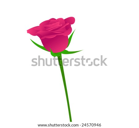One beauty pink rose on white background. Vector illustration.