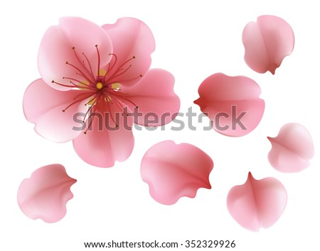 One blossoming pink sacura cherry isolated tree flower with petals against white background vector template - stock vector