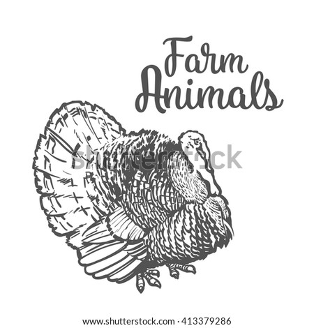 One feathered turkey bird, sketch style hand-drawn, vector farm animal home winged bird feathered turkey with white tail, one on a white background, realistic sketch turkey products for food, turkey - stock vector