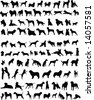 One hundred silhouettes of different breeds of dogs - stock vector