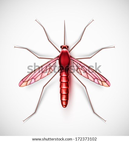 One isolated mosquito. Eps 10 - stock vector