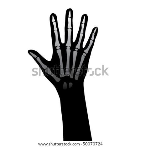 Open hand anatomy illustration. - stock vector