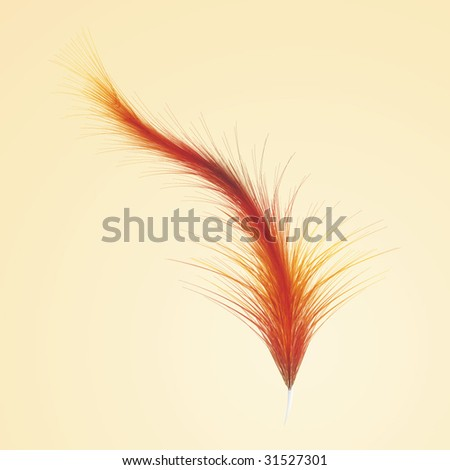 Orange feather — detailed illustration isolated on yellow background - stock vector