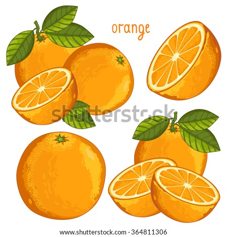 Orange fruit vector isolated set packaging juice design composition on white background illustration
