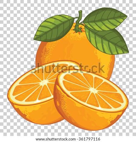 Orange isolated, Vector Orange, Slice of Orange. Composition of Orange and Slice. Illustration of Orange. Orange with leaves on transparent background. Juicy Orange, tropical fruit.  - stock vector