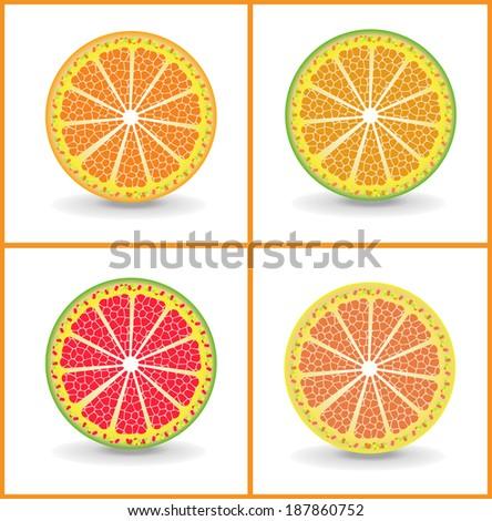 Orange slices - stock vector