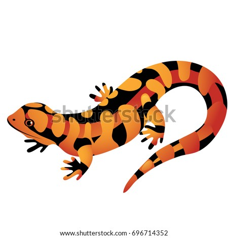 cartoon salamander stock images  royalty free images blue spotted salamander clipart fire salamander clipart