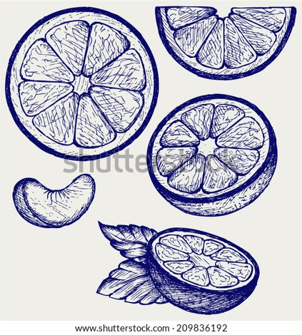 Oranges fruits with green leaves and slices. Doodle style - stock vector