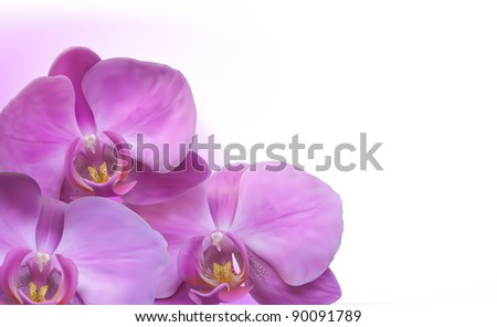 Orchid flower background - stock vector