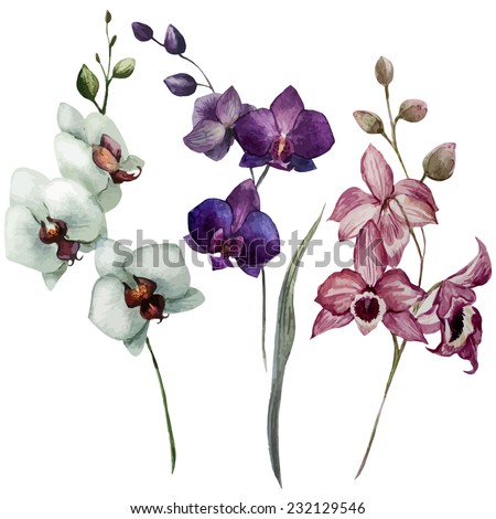 orchid, flower, watercolor - stock vector