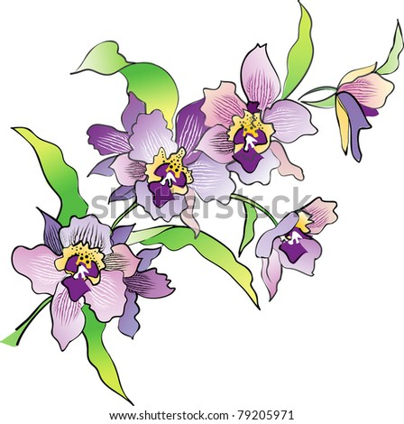 Orchid isoladed on white vector - stock vector