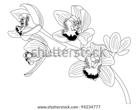 orchid line drawing - stock vector