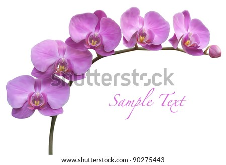 Orchid spa flower vector illustration - stock vector