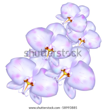 Orchids like design element