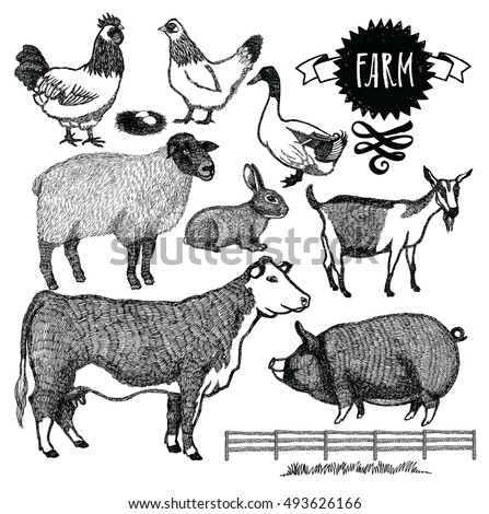 Organic farm Animals set