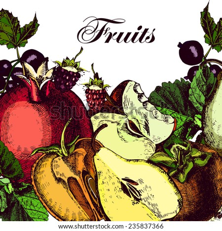 Organic Fruits. Still-life of juicy apples, pomegranates, persimmons, pears, raspberries, currants and mint.  Illustrations. Vector. - stock vector