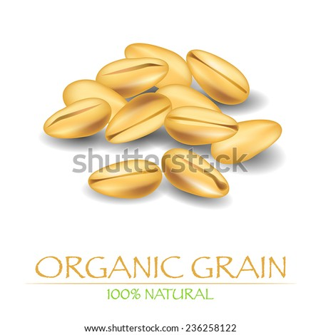 Organic grains. Vector illustration with seeds of wheat or rye.  - stock vector
