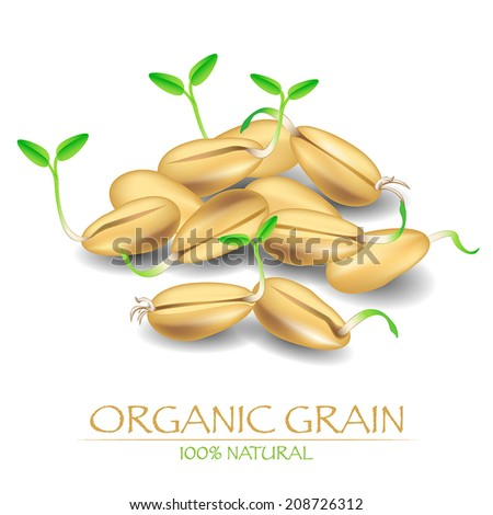 Organic grains. Vector illustration with sprout seeds of wheat or rye.  - stock vector