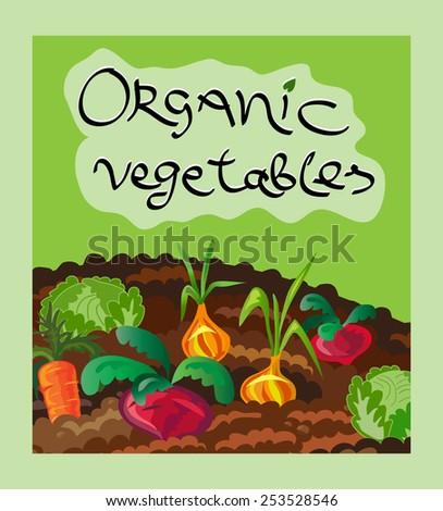 Organic vegetables vector illustration. Vegetables on garden bed. Cute design element. Cartoon food background. Handwritten lettering.  - stock vector