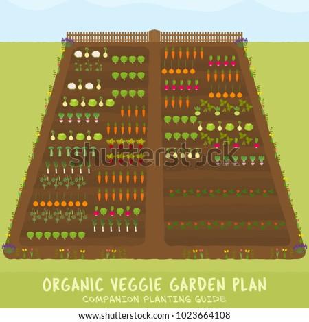 Organic Veggie Garden Plan Companion Planting Stock Photo (Photo ...