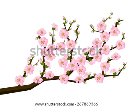 Oriental style painting, cherry blossom in spring - Illustration - stock vector