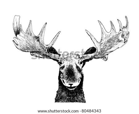 Venado Cuernos 11106679 likewise 914862403363076 further Buck Skull Clipart additionally Images likewise Deer outline. on buck deer clip art