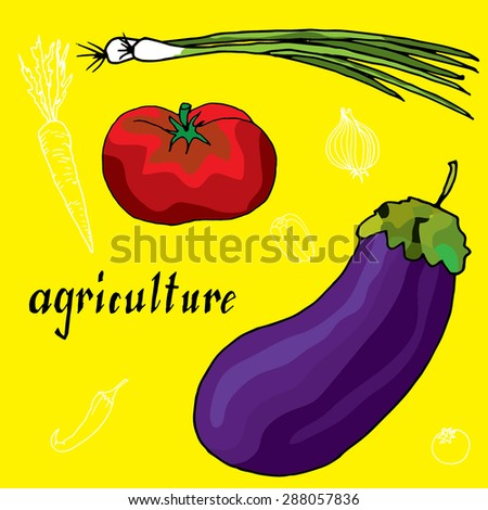 original drawing of onion, chilly pepper, tomato and eggplant - stock vector