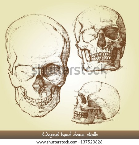 Original hand drawn skulls - stock vector