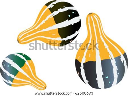 ornamental gourd - yellow and green pumpkins - stock vector