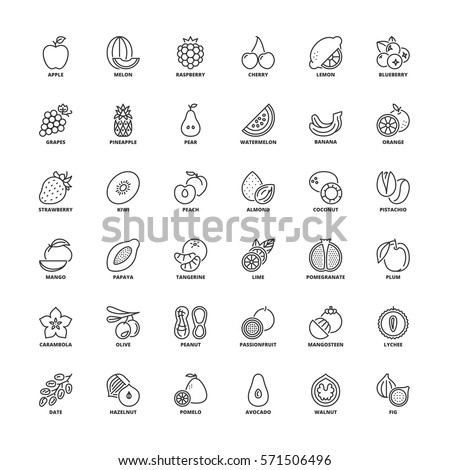 Outline icons set. Flat symbols about fruit