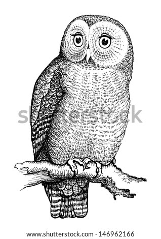 Owl hand drawn, black and white isolated vector illustration - stock vector