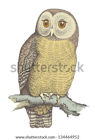 Owl hand drawn, vector illustration, color - stock vector