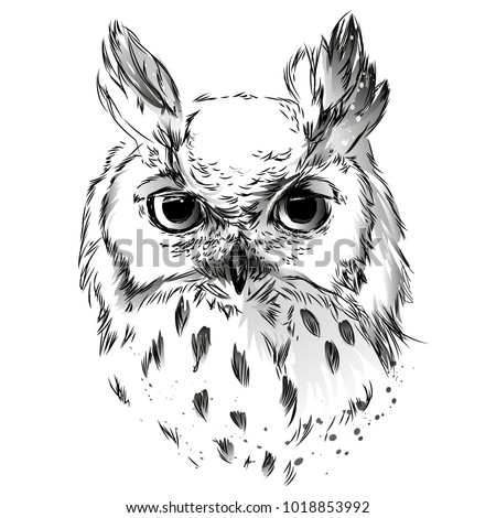 Owl's head black and white drawing