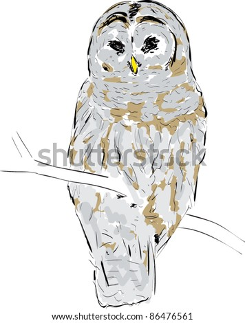 Owl sketch cartoon vector illustration stock vector for Cartoon owl sketch