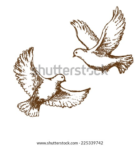 pair of flying doves vector sketch