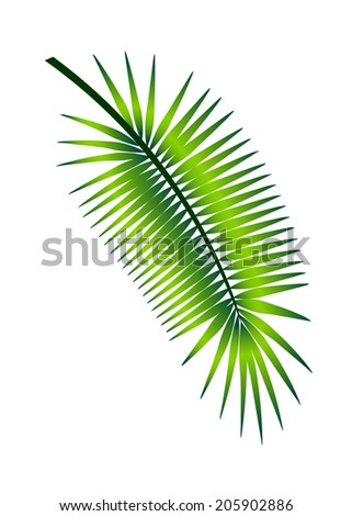 palm branch illustration - stock vector