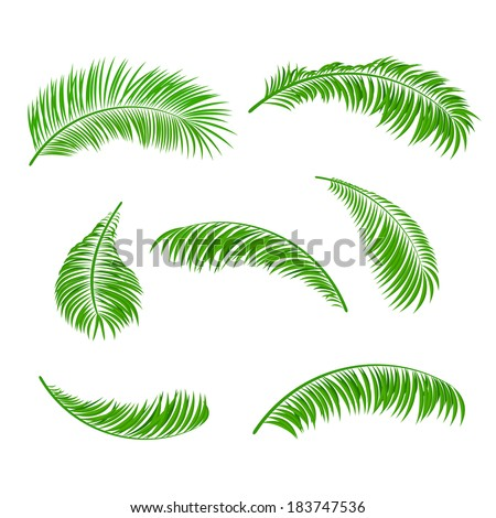 Palm leaves isolated on a white background, illustration. - stock vector