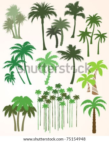 Palm Tree Collection - stock vector