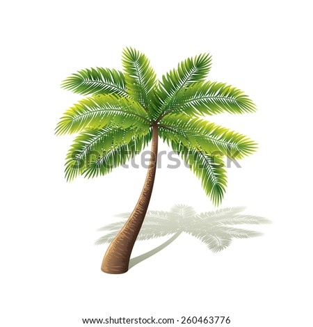 Palm tree isolated on white photo-realistic vector illustration - stock vector