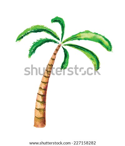 Palm tree, isolated watercolour vector illustration - stock vector