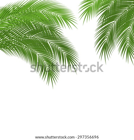 Palm tree leaves with a place for your text. Beautiful garden card design. vector illustration - stock vector