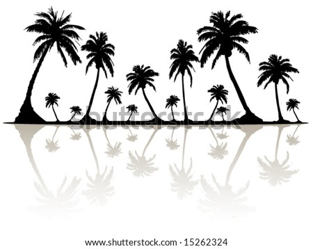 Palm Tree Silhouette and Reflection