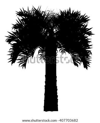 Palm tree vector silhouette - stock vector