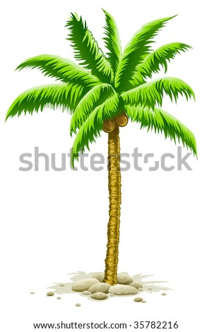 palm tree with coconut fruits - vector illustration