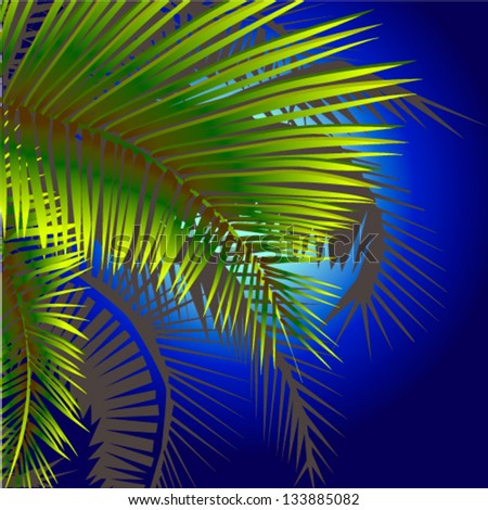 palm trees at night - stock vector